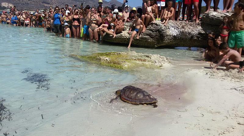 liberata tartaruga Caretta Caretta