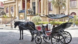 petizione per dire stop ai cavalli trainati a Palermo