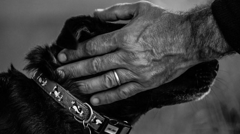 Potrebbero essere a un punto di svolta le indagini dei Carabinieri di Sciacca per risalire ai responsabili della morte per avvelenamento di una trentina di cani