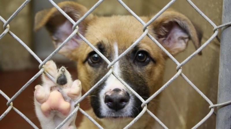 Rifugio cane abbandonato Favorita raccolta
