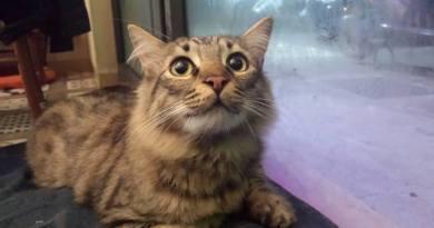 Al Nero Miciok una GatTombola a favore dei gatti di Ediga