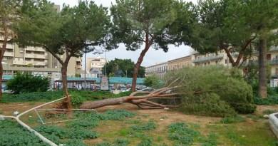 Albero caduto in piazza Principe Camporeale, a Palermo. Il forte vento lo ha abbattuto. Fortunatamente l'arbusto si trovava in un giardino chiuso per lavori