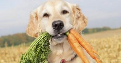 Saranno 4 cani i giudici speciali della prossima puntata di Masterchef Italia, pronti a giudicare i piatti presentati dagli aspiranti chef
