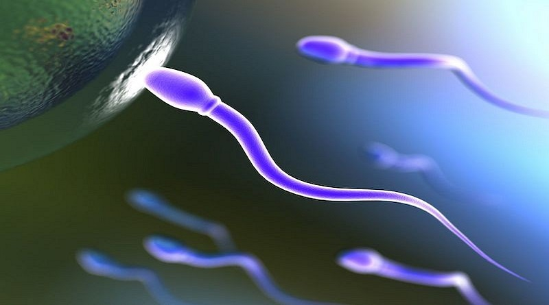 Gli spermatozoi potrebbero trasportare farmaci anticancro