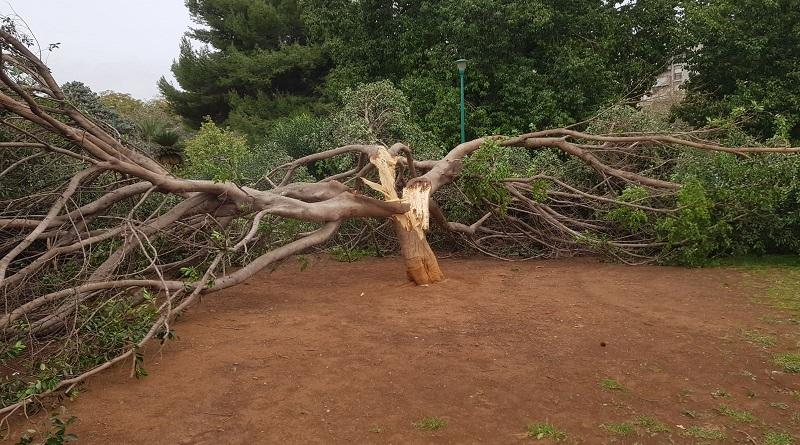 Danni per il vento in tutta la provincia di Palermo. Aerei dirottati su Catania. Un albero è stato spezzato in due all'interno di Villa Sperlinga