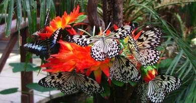 Inaugurata a Siracusa la Casa delle Farfalle: si trova in piazza Duomo a Ortigia, all'interno del giardino dell'Artemision
