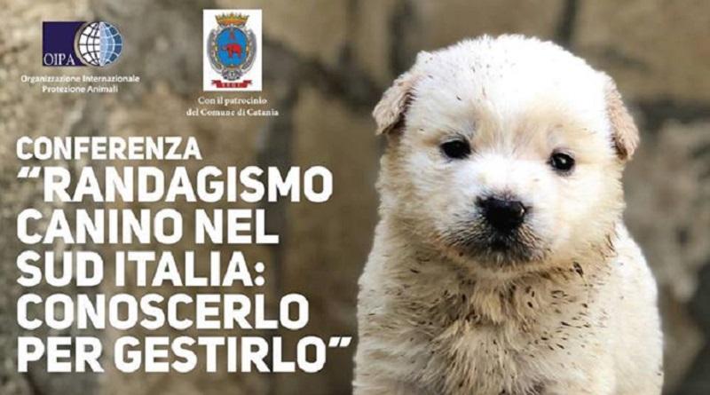 L'Oipa organizza martedì 29 maggio presso il Palazzo delle Cultura in via Vittorio Emanuele II a Catania, una conferenza sul randagismo canino nel Sud Italia