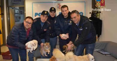 Ragusa, ritrovati sei cuccioli rubati da un'abitazione: denunciato un 26enne