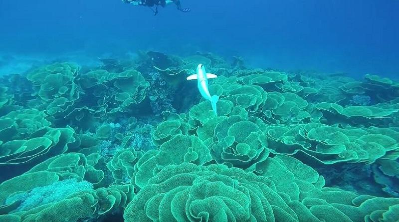 SoFi, il robot-pesce che fa i documentari nel mare
