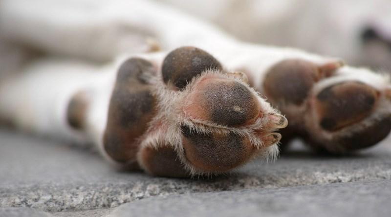 Cane trascinato con l'auto: denunciato un uomo a Caltanissetta