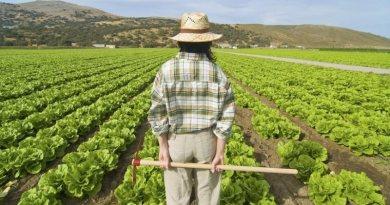 """Agricoltura, danni a molte aziende a causa del vento. Musumeci: """"Lunedì relazione Ispettorati"""""""