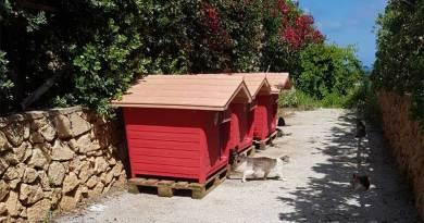 A Custonaci arrivano le casette rifugio per ospitare i gatti randagi