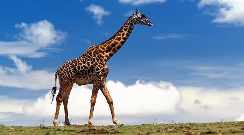 Sud Africa, regista muore dopo un colpo di giraffa