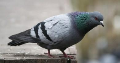 Ispica, spara ai colombi in chiesa e il filmato finisce in rete: denunciato