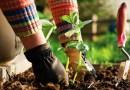 Garden therapy: il giardinaggio per rilassarsi e perdere peso