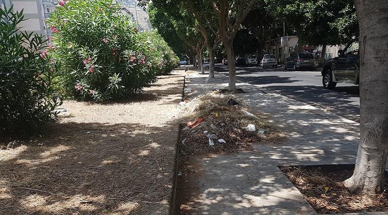 rifiuti e foglie secche in via Castellana a Palermo