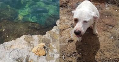 cane lanciato mare con grossa pietra al collo