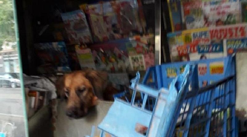 Oipa cane rinchiuso in un'edicola a Palermo