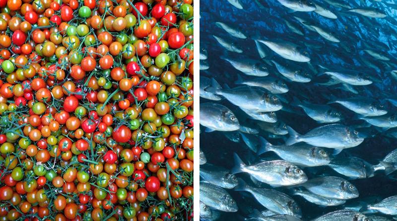 pesci e pachino