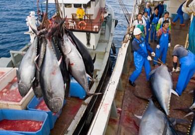 """Cisl: """"Taglio quote tonno Sicilia cancella 80 posti di lavoro, brucia 700 mila euro di investimento privato e favorisce le flotte di pescherecci stranieri"""""""