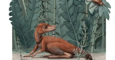 Il piccolo Kongonaphon kely