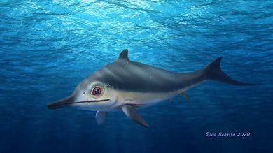 Antico ittiosauro con pinna dorsale