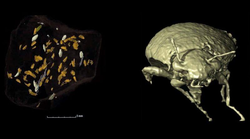 La Triamyxa coprolithica nello scanning 3D