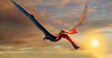 Pterosauro anhaguera