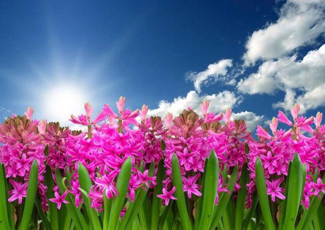 Meteo: ultimi giorni di freddo, la primavera è alle porte