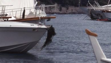 Photo of Così si distrugge la Posidonia