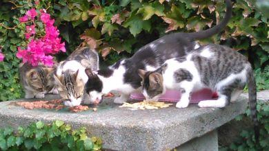 Photo of Cronaca di una vergogna: una colonia di gatti uccisa ad Ischia Ponte