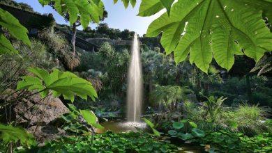Photo of Mediterranean Garden Society, a Ischia l'assemblea annuale