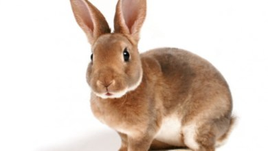 Photo of Due anni di carcere per chi mangia coniglio