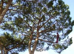 Photo of Serrara, allarme pini pericolosi a Succhivo