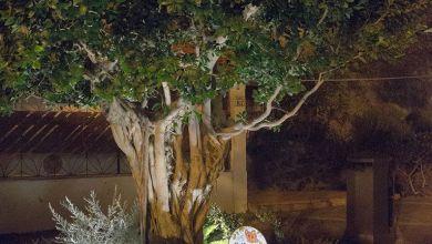 Photo of Tutti insieme sotto l'albero di Chiara