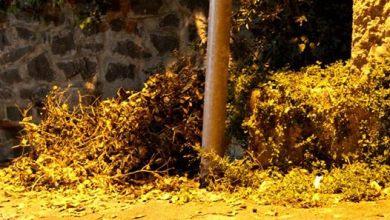 Photo of Forio, finalmente liberata dai rifiuti via Janno Piro