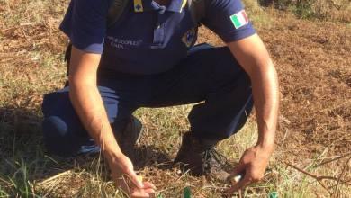 Photo of Bracconaggio, un calendario dei crimini accertati anche per Ischia