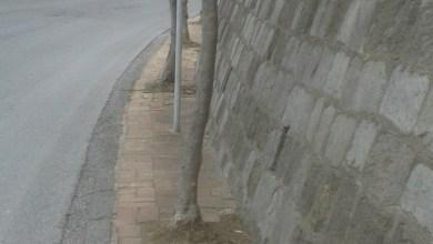 Photo of Piante sui marciapiedi, off limits le arterie stradali