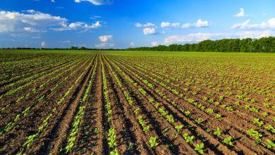 Photo of Progetto integrato giovani, 140 milioni per gli agricoltori campani