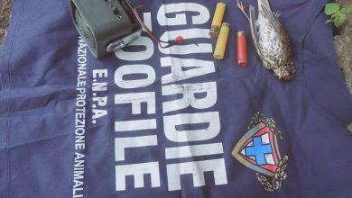 Photo of Blitz delle guardie ENPA: cacciava in giornata di silenzio venatorio