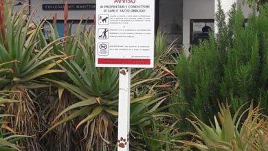 Photo of I giardini non sono toilettes per cani…