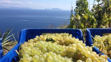 Photo of Trionfo ischitano al Vinitaly: è Vigna del Lume il miglior vino bianco del 2018