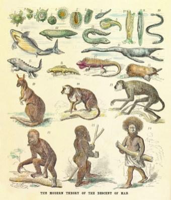 Vecchia 'risposta' di critica ad Ernst Haeckel