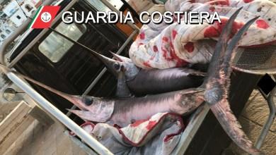 Photo of Pesca illegale, dalla guardia costiera multe per 8.700 euro