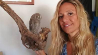 Photo of Liberato un altro esemplare di assiolo, era stato trovato sul ciglio di una strada