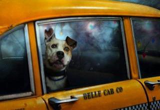 Photo of «La quota del taxi? Ho pagato anche per il cane»: la denuncia di un turista
