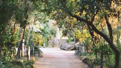 Photo of Progetto Evergreen, valorizziamo il verde