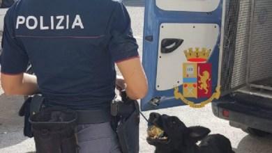Photo of Blitz con il cane antidroga, in tre denunciati per spaccio