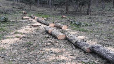 """Photo of """"Assalto"""" ai boschi, fioccano le sanzioni dei Carabinieri Forestali"""
