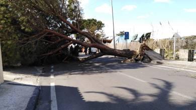 Photo of Via Baiola, due alberi abbattuti dal vento